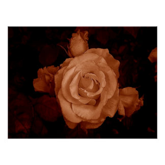 Sepia Roses Poster