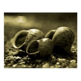 Sepia Shells Postcard