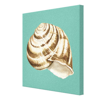 Sepia Striped Shell on Teal Canvas Print
