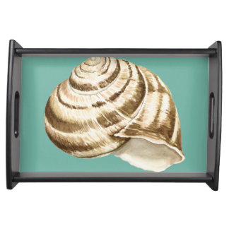 Sepia Striped Shell on Teal Serving Tray