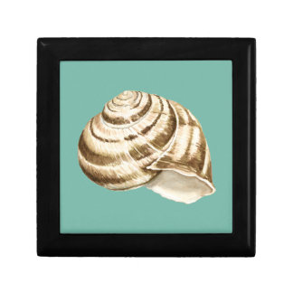 Sepia Striped Shell on Teal Small Square Gift Box