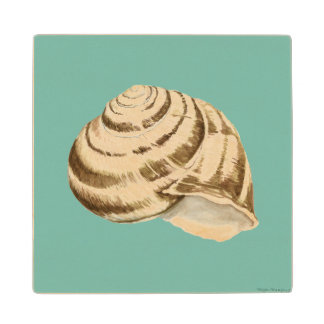 Sepia Striped Shell on Teal Wood Coaster