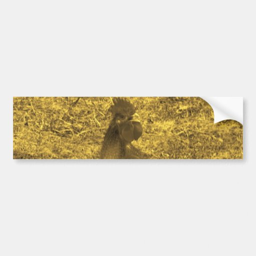 Sepia Tone Crowing Rooster Bumper Stickers