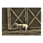 Sepia Tone  Goat and Barn Doors Greeting Cards