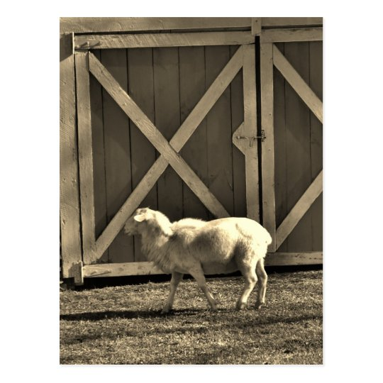 Sepia Tone  Goat and Barn Doors Postcard