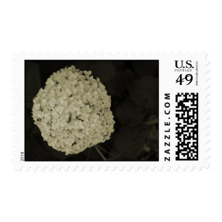 Sepia tone Hydrangea flower wedding postage stamps