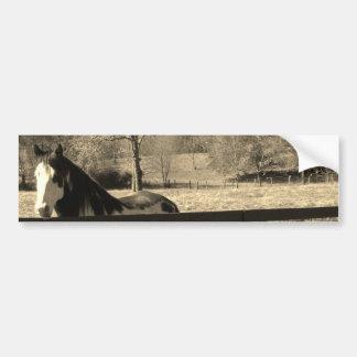 Sepia Tone Photo of black and white Horse Bumper Sticker