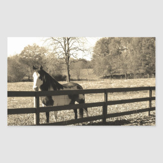 Sepia Tone  Photo of  black and white Horse Rectangular Sticker