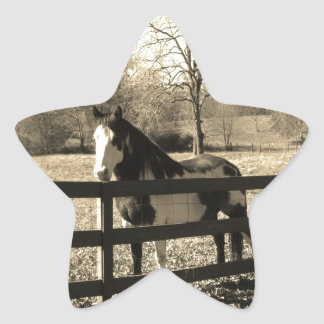Sepia Tone Photo of black and white Horse Stickers