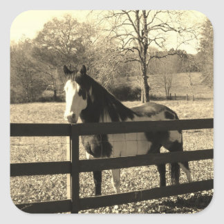 Sepia Tone Photo of black and white Horse Square Sticker