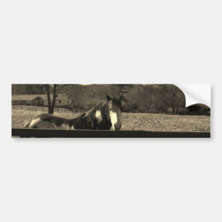 Sepia Tone Photo of brown and white Horse Bumper Stickers