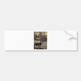 Sepia Tone Photo of Brown Cow Bumper Stickers