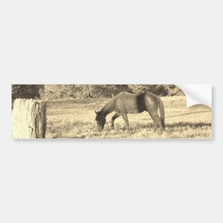 Sepia Tone Photo of brown Horse Bumper Sticker