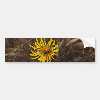 Sepia tone Yellow wildflowers Bumper Stickers
