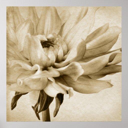 Sepia White & Cream Dahlia Background Customised Poster