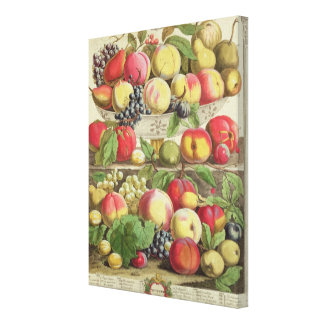 September, from 'Twelve Months of Fruits' Canvas Print