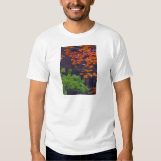 SEPTEMBER PICTURES TSHIRTS