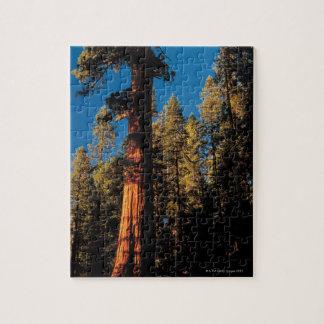 Sequoia National Park , California 2 Jigsaw Puzzle