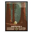 Sequoia National Park Postcard