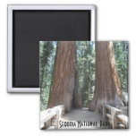 Sequoia National Park Square Magnet