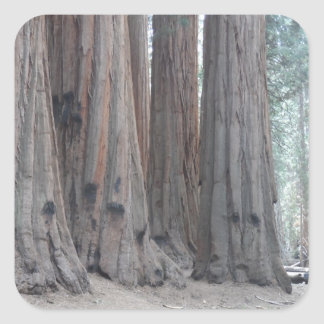 Sequoia National Park Square Stickers
