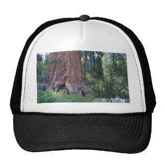 Sequoias Forrests Bark Fences Cap