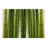 Serene Bamboo