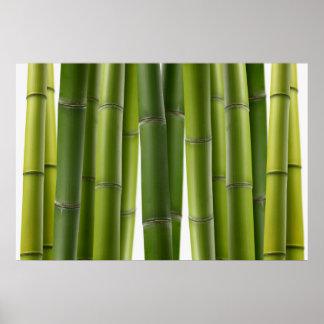 Serene Bamboo Poster