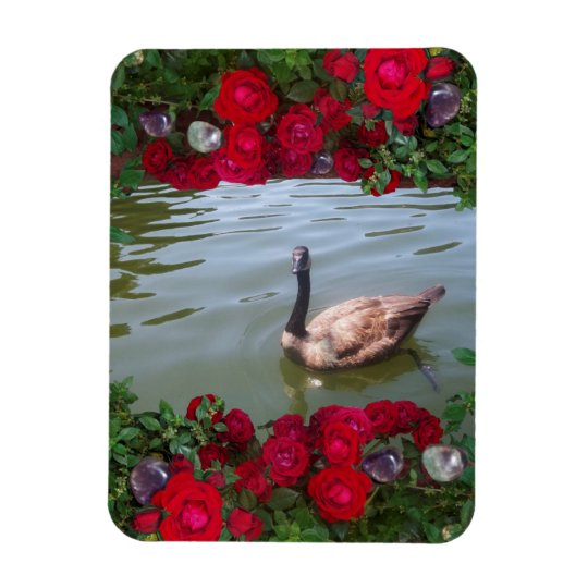 Serene Goose Of Wild Rose Pond Rectangular Photo Magnet
