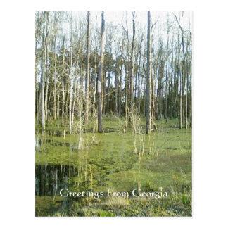 Serene Swamp Georgia Woodland Postcard