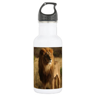 Serengeti Lion 532 Ml Water Bottle