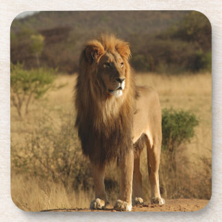 Serengeti Lion Beverage Coaster