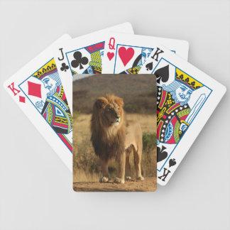 Serengeti Lion Bicycle Playing Cards
