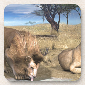 Serengeti Lions Beverage Coasters