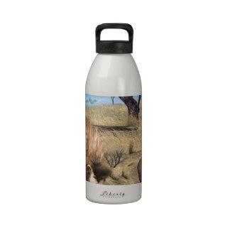 Serengeti Lions Water Bottles