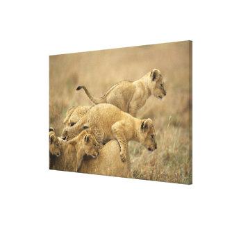 Serengeti National Park, Tanzania 2 Canvas Print