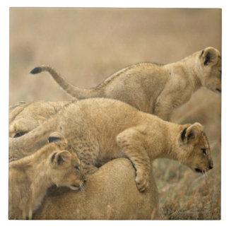 Serengeti National Park, Tanzania 2 Large Square Tile