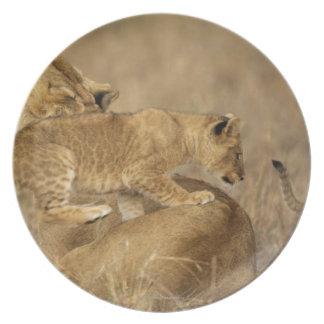 Serengeti National Park, Tanzania Party Plate