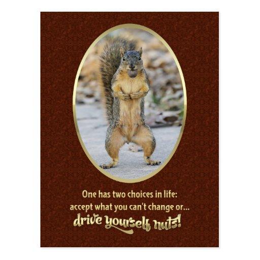 Serenity Prayer in a Nutshell Post Card