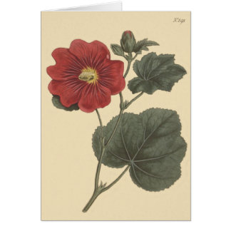 Seringapatam Hollyhock Illustration Card