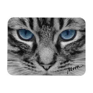 Serious Cat with Blue Eys Rectangular Photo Magnet