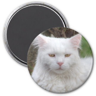 Serious White Cat Refrigerator Magnets