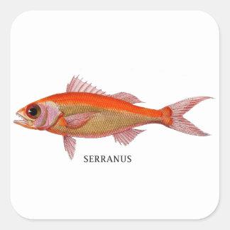 SERRANUS SQUARE STICKER
