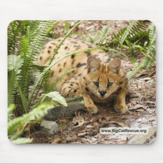 serval 019 copy mouse pads