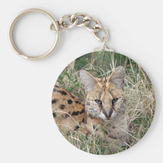 Serval cat relaxing in grass basic round button key ring