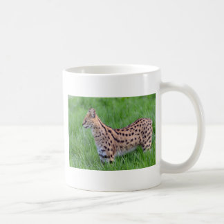 Serval in the grass mugs