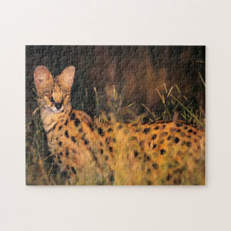 Serval (Leptailurus Serval) In Long Grass Jigsaw Puzzle