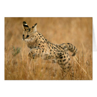 Serval (Leptailurus Serval) Jumping Card