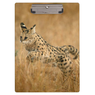 Serval (Leptailurus Serval) Jumping Clipboard