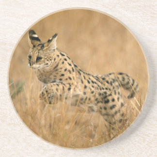 Serval (Leptailurus Serval) Jumping Coaster